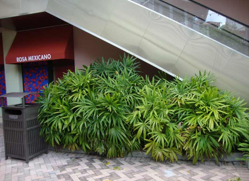 small-palm-cover